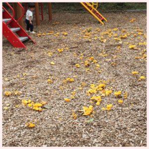公園で見つけたキノコ〜毒キノコかしら?〜